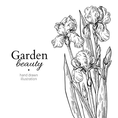 Iris bouquet. Flower and leaves drawing. Vector hand drawn engraved floral set Vector Illustratie