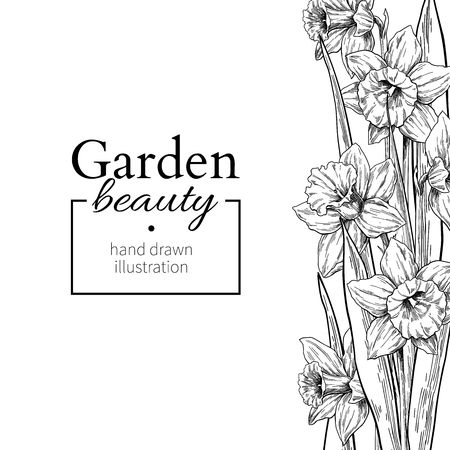 Daffodil flower and leaves border drawing. Vector hand drawn engraved floral frame.