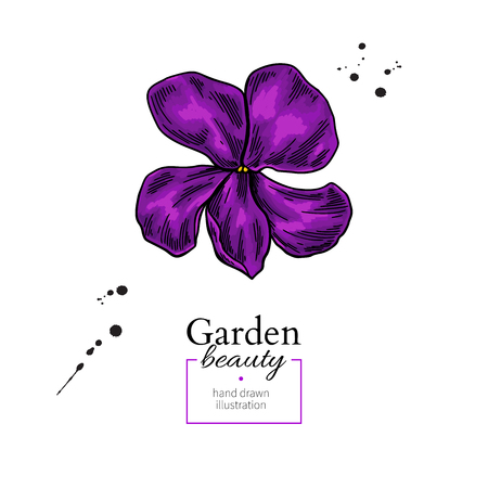 Violet flower drawing. Vector hand drawn  floral object. Viola sketch. Wild botanical garden bloom.  Great for decor, label, icon, greeting cards,  イラスト・ベクター素材