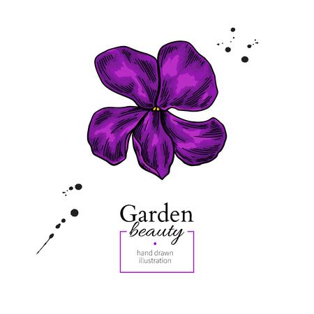 Violet flower drawing. Vector hand drawn  floral object. Viola sketch. Wild botanical garden bloom.  Great for decor, label, icon, greeting cards, Illustration