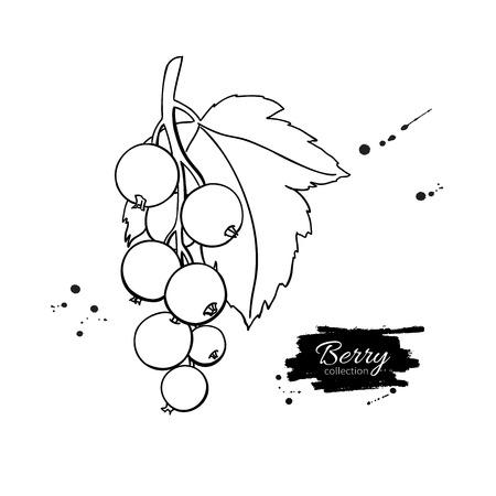 Schwarze oder rote Johannisbeere Vektorzeichnung. Isolierte Beerenzweig sketc