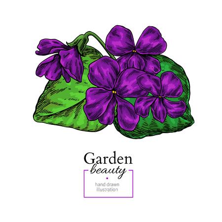 Violet flower drawing. Vector hand drawn floral bouquet. Viola nature sketch.  イラスト・ベクター素材