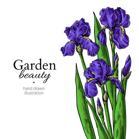 Bukiet irysa. Rysunek kwiatów i liści. Wektor ręcznie rysowane zestaw kwiatowy. Kwitnący ogród