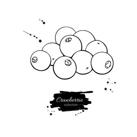 Cranberry-Vektorzeichnung. Isolierte Beerenzweigskizze auf Weiß Vektorgrafik