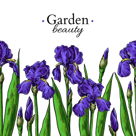 Iris flower and leaves border drawing. Vector hand drawn  floral seamless pattern. Garden bloom frame Botanical  Black ink sketch. Great for banner, invitations, greeting cards, decor Фото со стока - 106134019