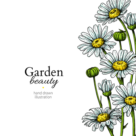 Daisy flower border drawing. Vector hand drawn floral frame. Chamomile Фото со стока - 106181208