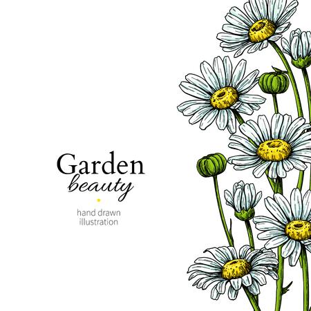 Dibujo de borde de flor de Margarita. Vector marco floral dibujado a mano. Manzanilla Ilustración de vector