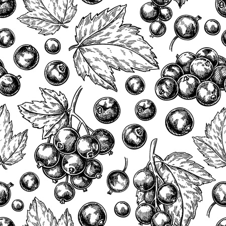 Nahtloses Muster der schwarzen Johannisbeere. Vektorzeichnung. Isolierte Beerenzweigskizze auf weißem Hintergrund. Vektorgrafik