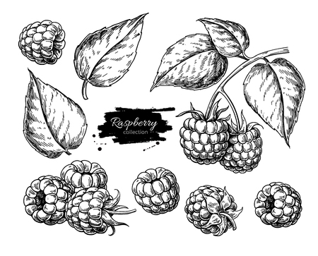 Raspberry vector drawing. Isolated berry branch sketch on white Zdjęcie Seryjne - 106952554