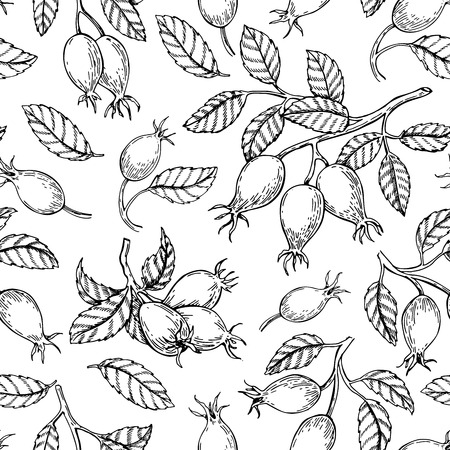 Rosehip seamless pattern. Vector drawing. Berry branch sketch on white background.