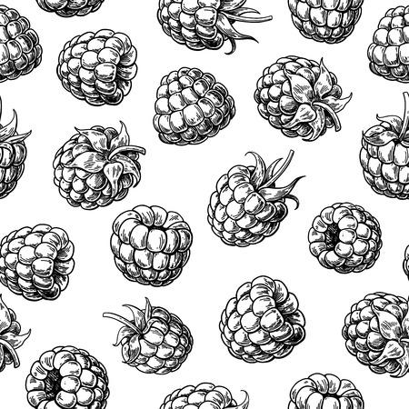 Nahtloses Muster der Himbeere. Vektorgrafik. Isolierte Beerenskizze auf weißem Hintergrund. Sommerfrucht gravierter Hintergrund. Detaillierte handgezeichnete vegetarische Kost. Ideal für Verpackungsdesign, Tee- oder Saftetikett, Druck