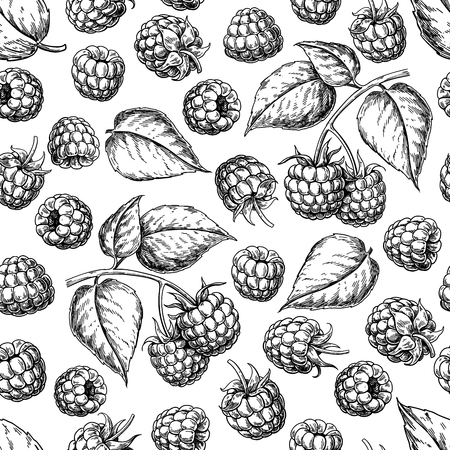 Raspberry seamless pattern. Vector drawing. Isolated berry branch sketch on white background. Ilustrace