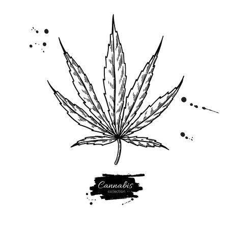 Dessin vectoriel de feuille de marijuana. Illustration botanique de cannabis. Croquis de plante de chanvre. Médicament médical. Objet de style de gravure isolé sur fond blanc. Idéal pour l'étiquette de magasin, l'emblème, le signe, l'emballage