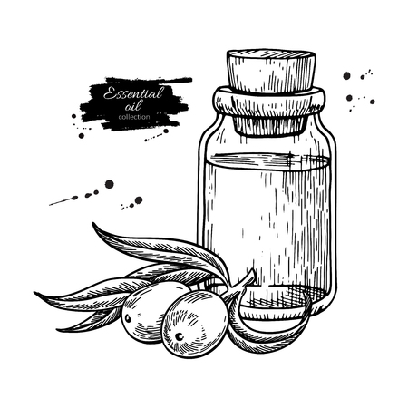 Seabackthorn essential oil bottle with berry hand drawn vector illustration. Isolated drawing for Aromatherapy treatment, alternative medicine, beauty and spa, cosmetic ingredient. Great for label, packaging design.
