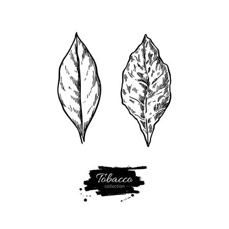 Tabakblatt-Vektor-Zeichnung. Frisch und getrocknet. Botanische handgezeichnete Abbildung. Pflanzenskizze. Gravierte isolierte Objekte. Ideal für Shop-Etikett, Emblem, Schild, Verpackung Vektorgrafik