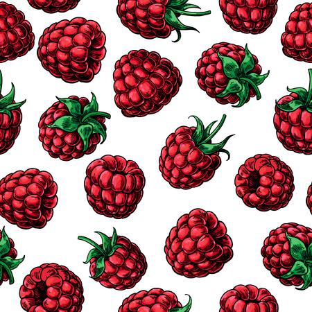 Himbeer nahtloses Muster. Vektorzeichnung. Isolierte Beerenskizze auf weißem Hintergrund. Sommerfrucht. Detaillierte handgezeichnete vegetarische Küche. Ideal für Verpackungsdesign, Tee- oder Saftetikett, Druck
