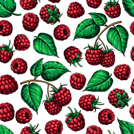 Raspberry seamless pattern. Vector drawing. Isolated berry branc