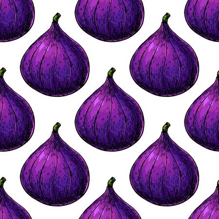 Fig vector seamless pattern drawing. Hand drawn isolated violet Vettoriali