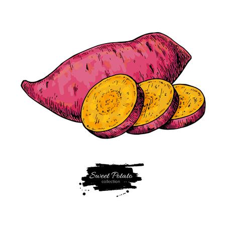 Illustrazione vettoriale disegnato a mano di patate dolci. Oggetto affettato di verdure isolato. Disegno dettagliato dell'alimento vegetariano. Prodotto del mercato agricolo. Ottimo per menu, etichetta, icona