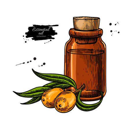 Seabackthorn essential oil bottle with berry. Hand drawn vector illustration. Isolated drawing for Aromatherapy treatment, alternative medicine, beauty and spa, cosmetic ingredient. Great for label, packaging design.