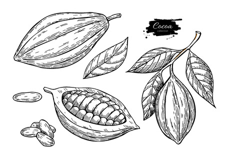 Cacao vector super food set. Biologische gezonde voeding schets.