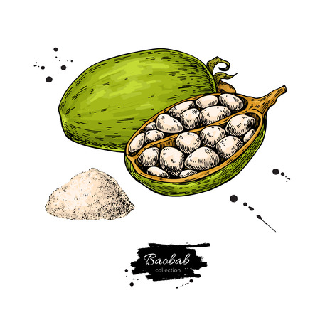 Baobab vector superfood drawing. Organic healthy food sketch with pouder. Great for banner, poster, label, packaging. Isolated hand drawn illustration on white background Imagens - 128503795