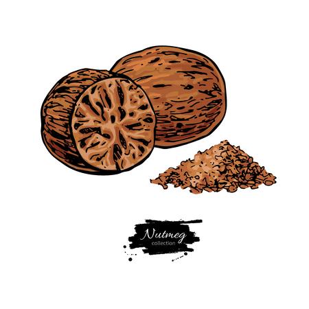 Gemahlene Gewürznuss-Skizze. Kräuterzutat, kulinarischer und Kochgeschmack. Vektorgrafik