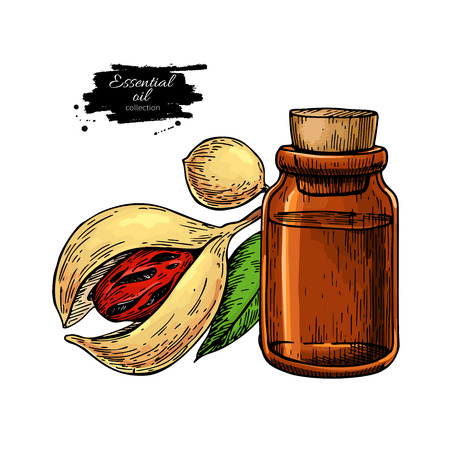 Nutmeg essential oil bottle and mace fruit. Hand drawn vector illustration.