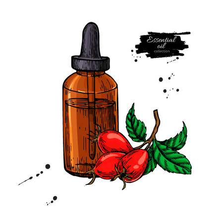 Rosehip essential oil bottle with berry Hand drawn vector illustration. Isolated drawing for aromatherapy treatment, alternative medicine, beauty and spa, cosmetic ingredient. Great for label, packaging design.