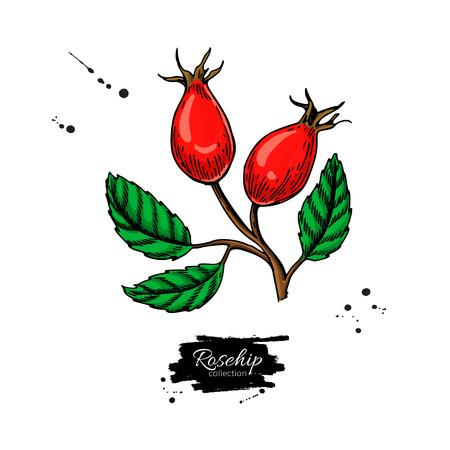 Hagebutten-Vektor-Zeichnung. Isolierte Beerenzweigskizze auf weißem Hintergrund. Sommerfrucht Vektorgrafik