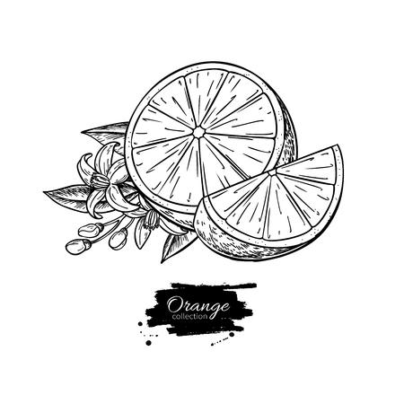 Dibujo naranja. Ilustración de vector