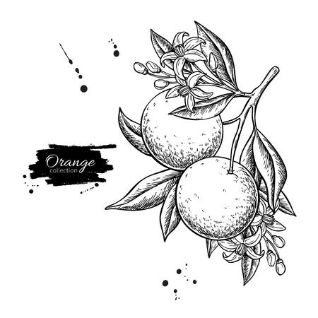 Orange branch  drawing.