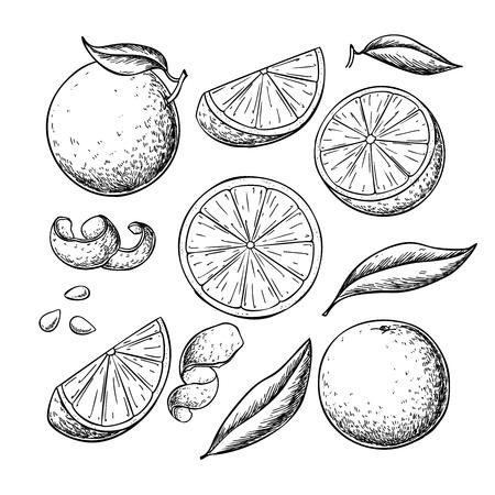 Orange fruit  drawing set Foto de archivo - 121013448