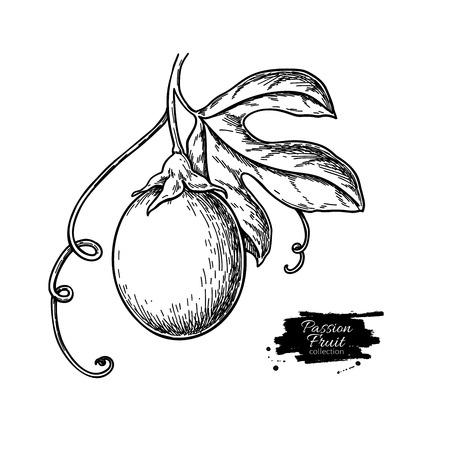 Dibujo de rama de fruta de la pasión.