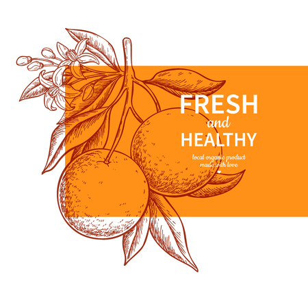 Disegno vettoriale di etichetta arancione. Modello inciso di agrumi. Illustrazione estiva disegnata a mano. Banner vintage, confezione del prodotto, concetto di design. Poster di succo tropicale, segno di pompelmo Vettoriali