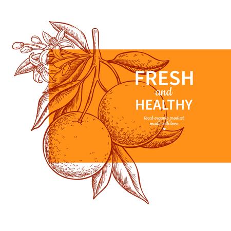 Oranje label vector tekening. Citrusvruchten gegraveerd sjabloon. Hand getekende zomer illustratie. Vintage banner, productverpakking, ontwerpconcept. Tropische sapposter, grapefruitteken Vector Illustratie