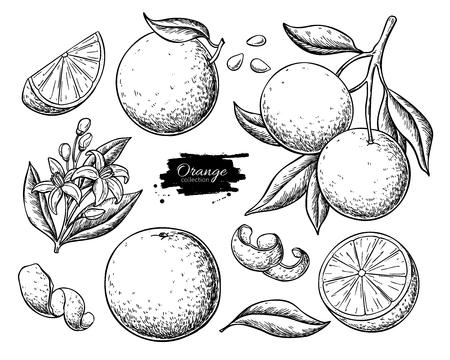 Orangenfrucht-Zeichnungsset.