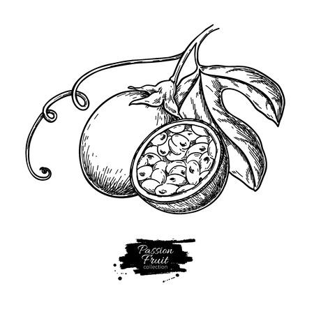 Disegno vettoriale di frutto della passione. Illustrazione di cibo tropicale disegnata a mano. Frutto della passione estivo inciso. Maracuya intero e affettato con foglie. Schizzo botanico vintage per etichetta, design packaging succo juice Vettoriali