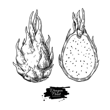 Dragon fruit vector drawing. Hand drawn tropical food illustration. Engraved summer dragonfruit. Whole and sliced pitaya. Botanical vintage sketch for label, juice packaging design Standard-Bild - 124287497