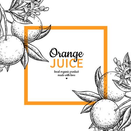 Orange label vector drawing. Citrus fruit engraved frame template. Hand drawn summer illustration. Vintage banner, product packaging design concept. Tropical juice poster, grapefruit sign