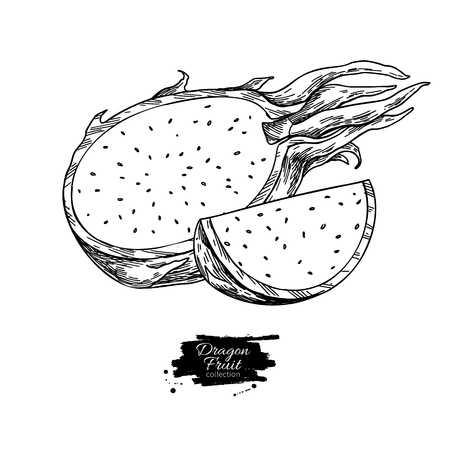 Dragon fruit  drawing. Standard-Bild - 121013451