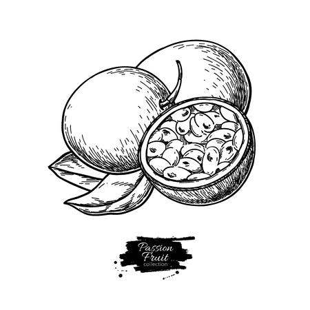 Disegno vettoriale di frutto della passione. Illustrazione di cibo tropicale disegnata a mano. Frutto della passione estivo inciso. Vettoriali