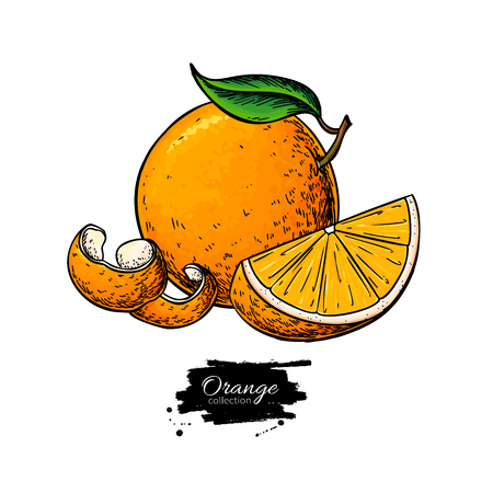 Orange vector drawing. Summer fruit color illustration. Isolated hand drawn whole orange, slice and peel. Botanical sketch of citrus. Vintage tropical food for label, print, juice packaging Ilustração