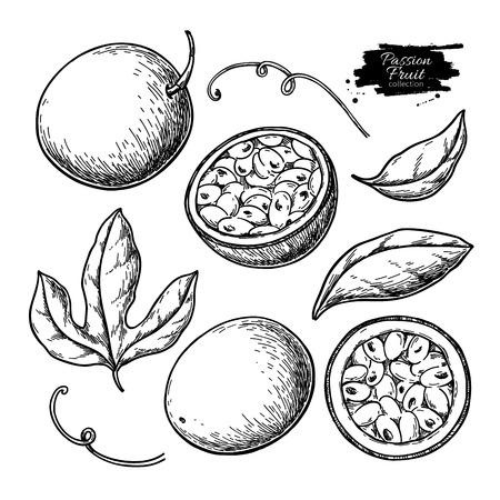 Passievrucht vector tekening set. Hand getekend tropisch voedsel illustratie. Gegraveerde zomerpassievruchten