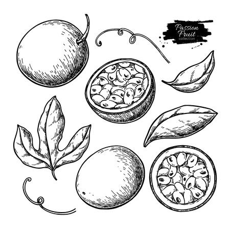 Passion fruit vector drawing set. Hand drawn tropical food illustration. Engraved summer passionfruit