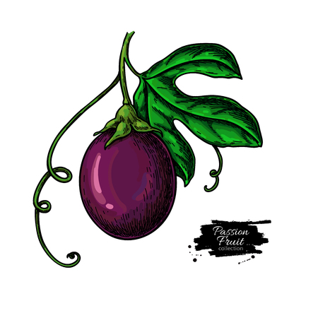 Passion fruit branch vector drawing. Hand drawn tropical food illustration. Summer passionfruit objects. Laeves and maracuya. Botanical sketch for label, print, juice packaging design Stock Vector - 124023825