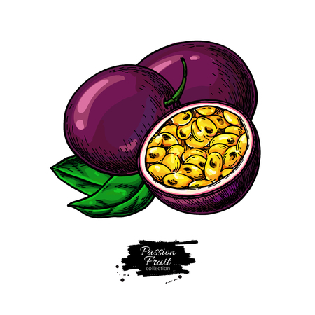 Passion fruit vector drawing. Hand drawn tropical food illustration. Summer passionfruit. Whole and sliced maracuya with leaves. Botanical sketch for label, juice packaging design