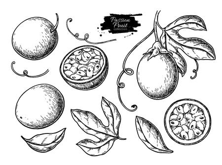 Conjunto de dibujo vectorial de fruta de la pasión. Ilustración de comida tropical dibujada a mano. Fruta de la pasión de verano grabada