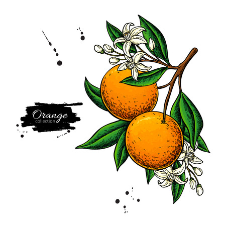 Orange branch  drawing. 스톡 콘텐츠 - 121013536