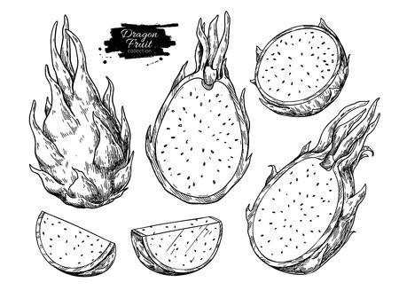 Dragon fruit vector drawing set. Hand drawn tropical food illustration. Engraved summer dragonfruit. Whole and sliced pitaya. Botanical vintage sketch for label, juice packaging design